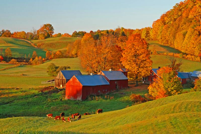 Early_Light_on_Jenne_Farm_-_Vermont_2008_op_800x535.jpg